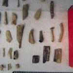 exhibit - bones 4