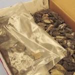 exhibit - bones 7